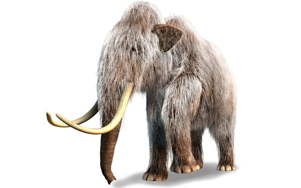 "Scientists a step closer to ""bringing back"" mammoths"