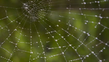 Could Spider Silk Stop a Moving Train?