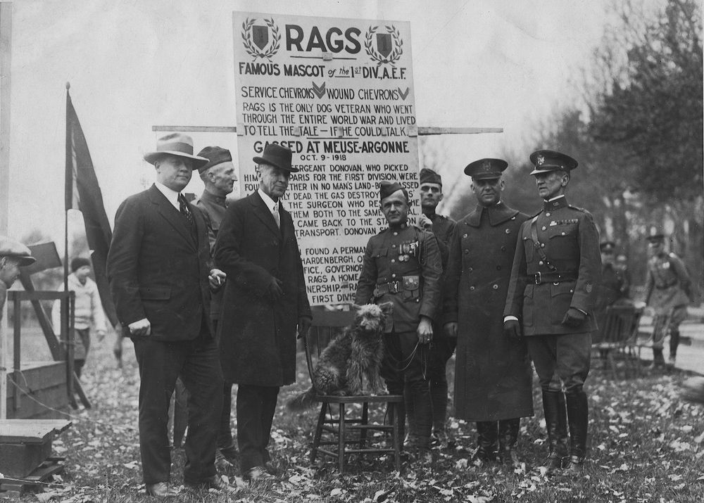 The animals that helped win World War I