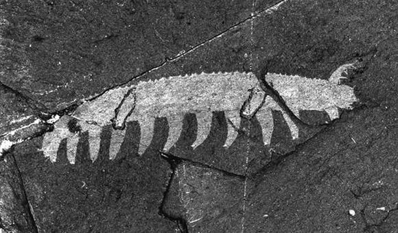 Preview thumbnail for video'101 Objects: Burgess Shale