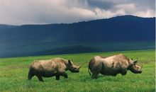 Eight Endangered Black Rhinos Have Died in a Sanctuary