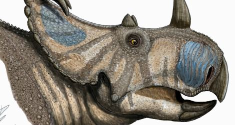 A life restoration of Spinops sternbergorum