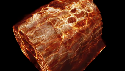 Watch Cells Move Within Living Animals in This Breathtaking Footage