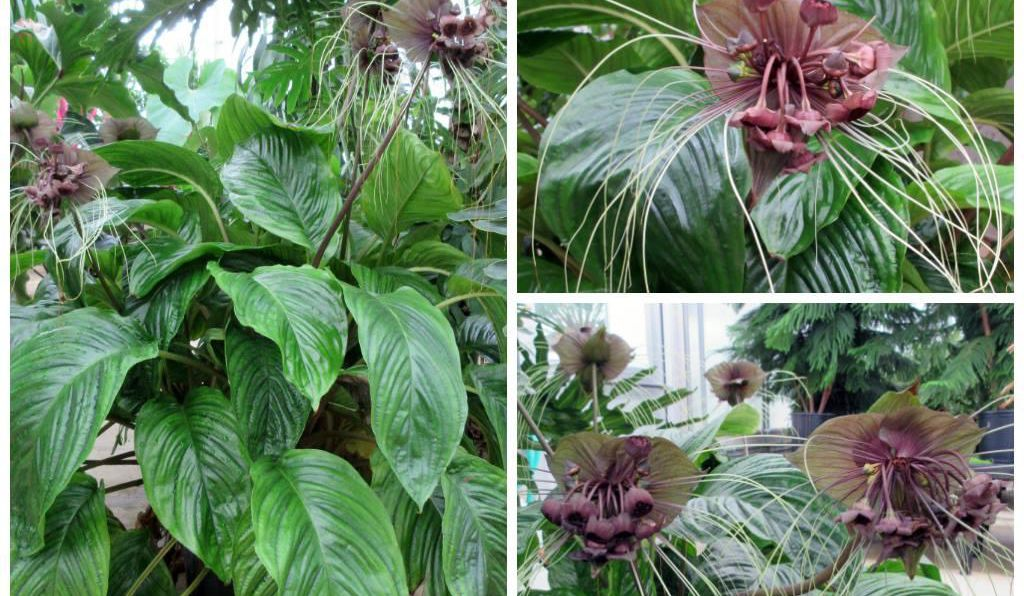 Smithsonian Gardens is kicking off #SpookyPlantsWeek filled with odd, creepy-looking plants.