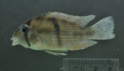 Facebook Friends of Social Networking Scientists Help Identify Fish