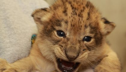 Meet the Babies of the National Zoo