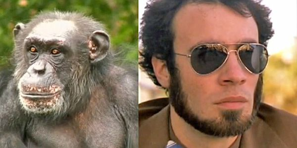 Can you make a man out of a monkey?