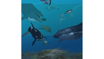 Take a Deep Dive Into The Reasons Land Animals Moved to the Seas
