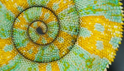 The Science Behind Nature's Patterns