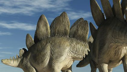 Scientists Clash Over Stegosaurus Sexing