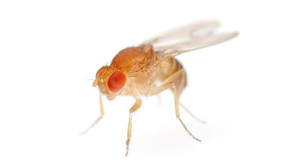 How Fruit Fly Brains Could Improve Our Search Engines