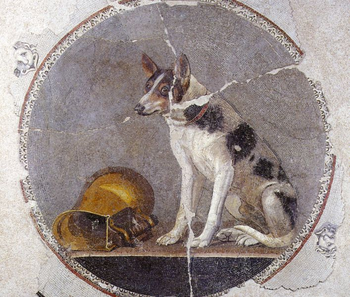 Photo of a second century mosaic from Egypt that depicts a dog with white fur and black and brown spots on its back and face standing to the right of a gold pitcher. The mosaic is in a circular shape, and outside the circle is crackled white tile from the