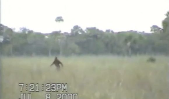 Preview thumbnail for video'Dave Shealy's 2000 Skunk Ape Clip