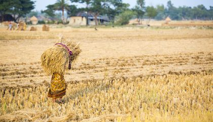 This Farmer Grew Four Times As Much Rice in the Same Amount of Land