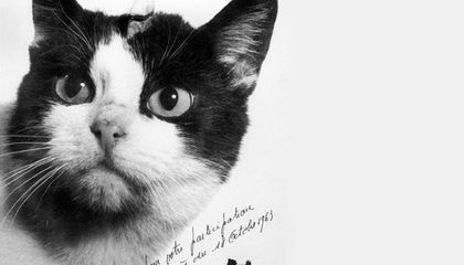 Félicette, the First Cat in Space, Finally Gets a Memorial