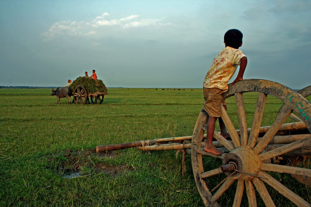 Childhood of Boishakh a Bangla first month name, The paddy