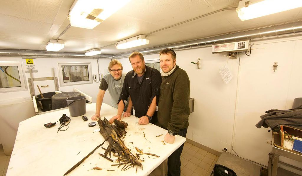 Geir Johnsen, Jørgen Berge and Øyvind Ødegård with part of the tree trunk they brought aboard the Helmer Hanssen in Rijpsfjorden, Svalbard.