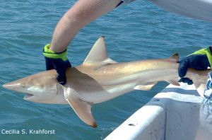 Jawshank Redemption: Understanding shark behavior through science