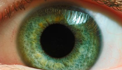 Here's Why Your Eyes Seem to Be Wired 'Backward'