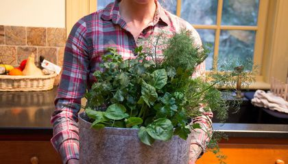 This Invention Makes a Gardener Out of Anyone