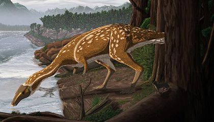 Rare 'Light-Footed' Dinosaur Discovered in Australia for the First Time