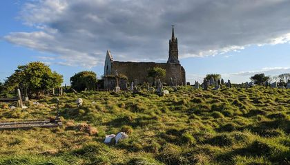 Grazing Goats and Sheep Help Uncover Historic Headstones in Ireland