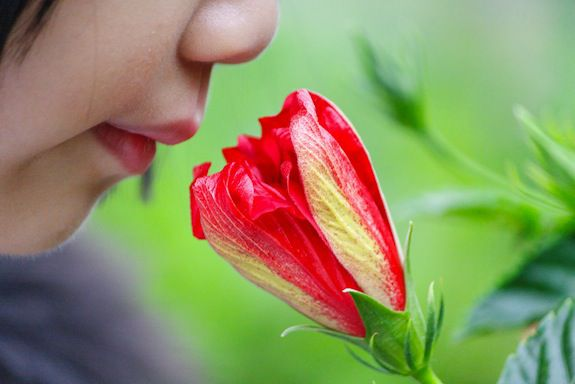 Smell Hallucinations Exist Too, and Could Be a Sign of