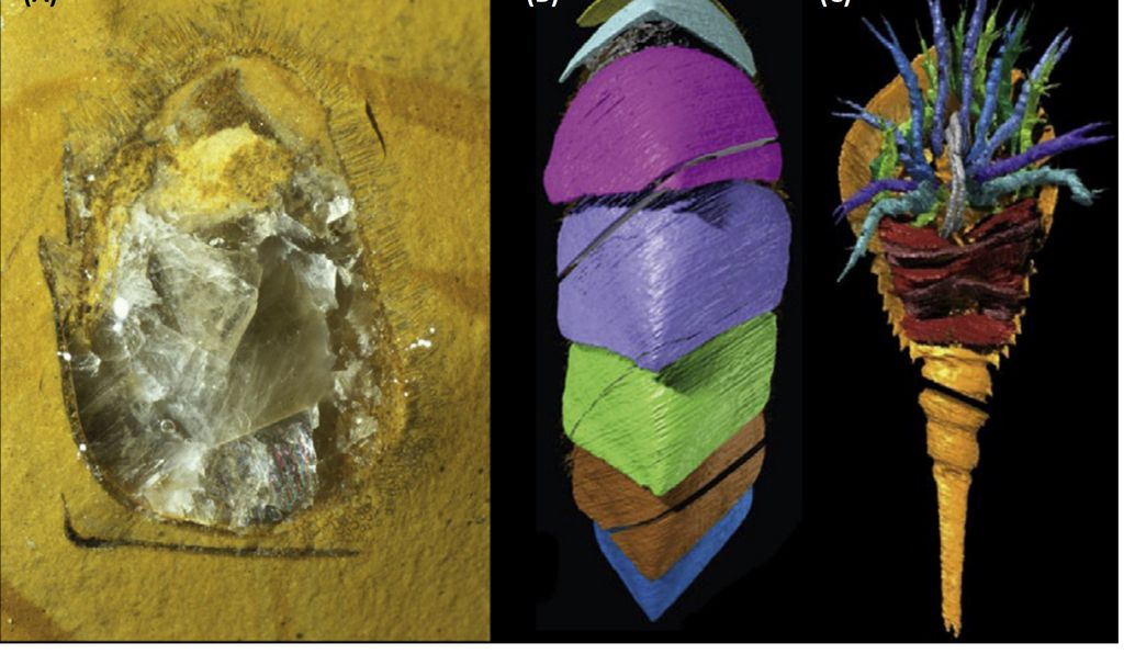 This image shows how photographs of a fossil (left) were reconstructed with digital tools (right) .