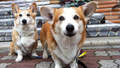 Ruff News: Man's Best Friend May Have Been Domesticated Twice