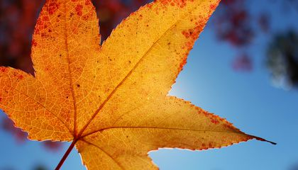 Image: Viewfinders unveil fall colors for the colorblind