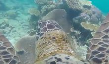 Researchers Strapped a Go-Pro to a Sea Turtle, and Here's What They Got