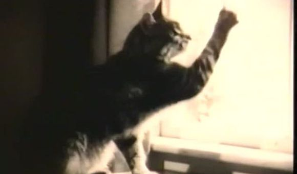 Preview thumbnail for video'How to Train a Cat to Star in a Television Commercial