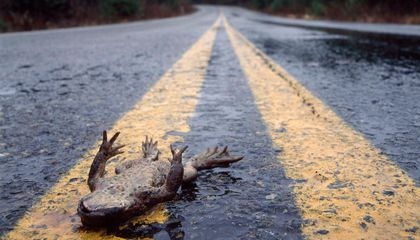 Changes in California's Roadkill Linked to State's Drought
