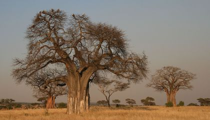 New Survey Estimates Earth Has 60,065 Tree Species