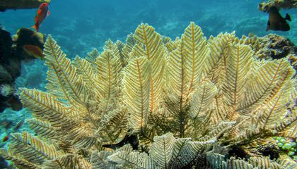 Image: Ocean heat waves are threatening marine life, biodiversity