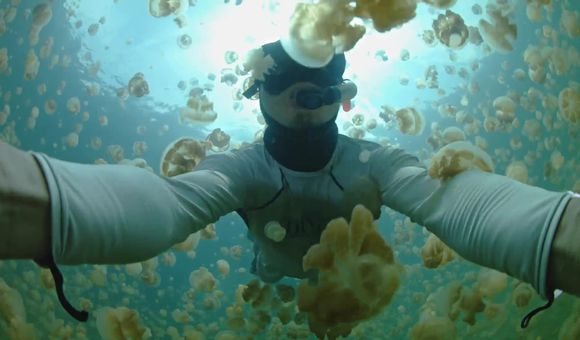 Preview thumbnail for video'2014 Smithsonian In Motion Video Contest Editor's Pick - Jellyfish Lake