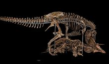 The Nation's T. rex Returns to the Smithsonian