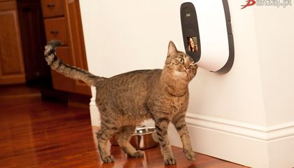 This Device Lets People Video Chat With Their Pets