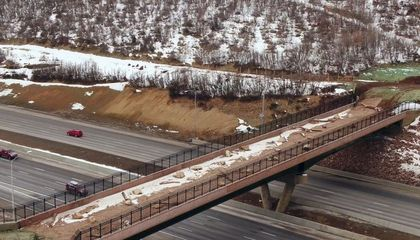 Animals Are Using Utah's Largest Wildlife Overpass Earlier Than Expected