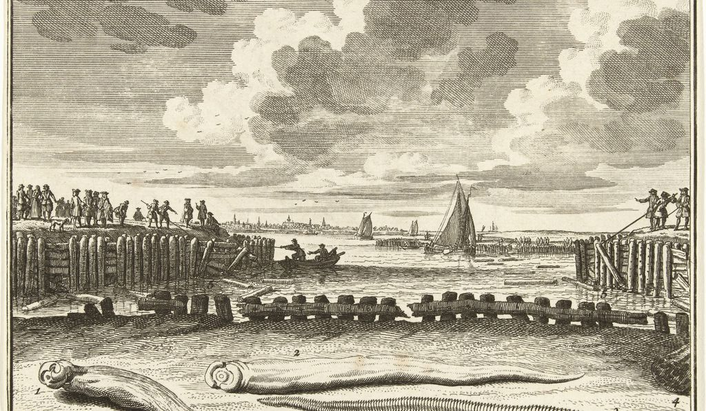 "In the Netherlands, dike inspectors discovered a ""worm"" in the wooden breakers after a storm in 1730. This print shows workers removing the wood from the dike. The shipworms in the foreground are, obviously, not to scale but an exaggerated rendition."