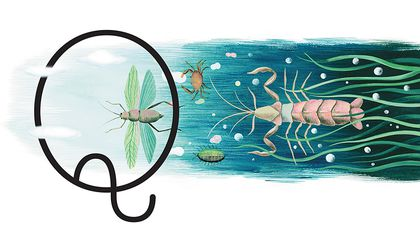 What Did Insects Evolve From and More Questions From Our Readers