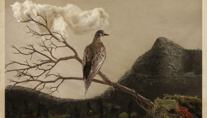 100 Years After Her Death, Martha, the Last Passenger Pigeon, Still Resonates