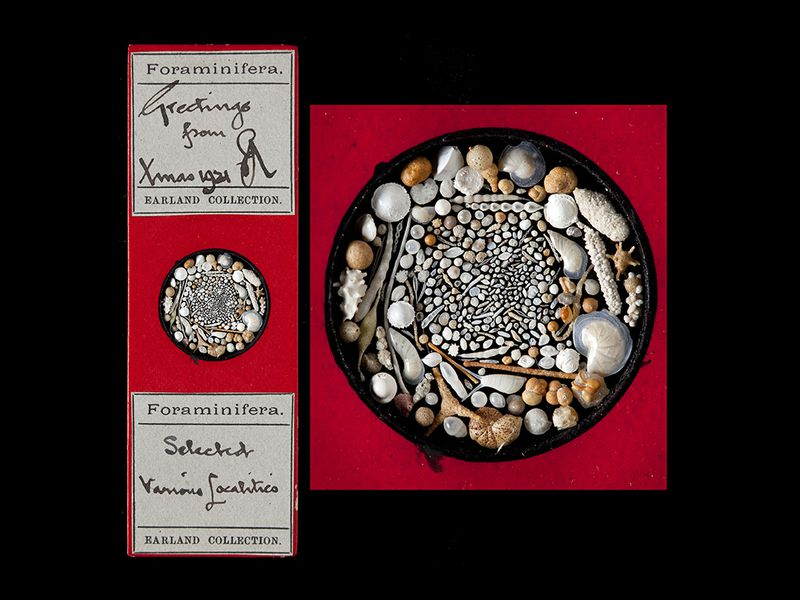 the nerdiest christmas cards ever may be these microscope slides