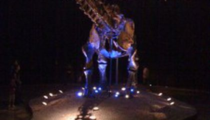 Dinosaurs Get Ready to Go to Abu Dhabi