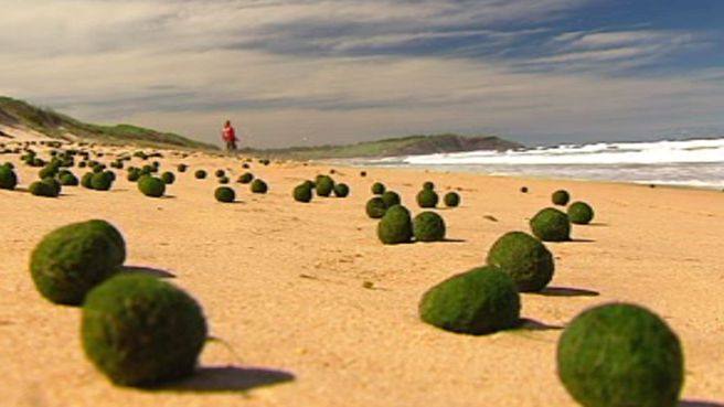 Thousands of Strange Green Balls Appeared Overnight on a Beach in