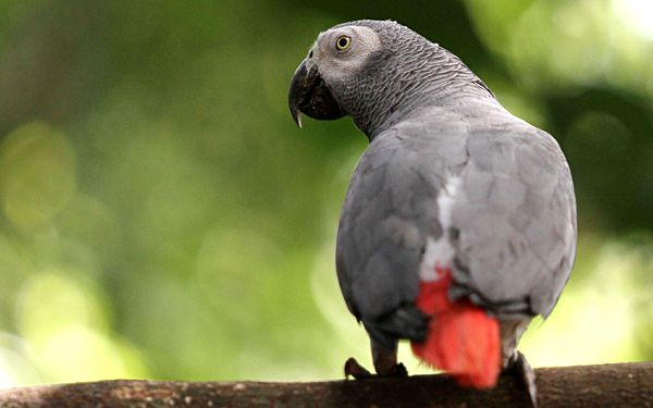 Parrot missing for years returns speaking Spanish