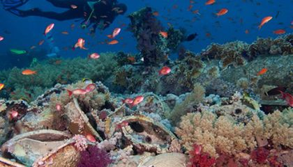 Can Swarming Robots and Cloud Umbrellas Help Save Coral Reefs?