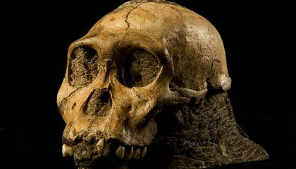 Our Closest Ape-Like Ancestor Is Reshuffling Thinking About Human Evolution