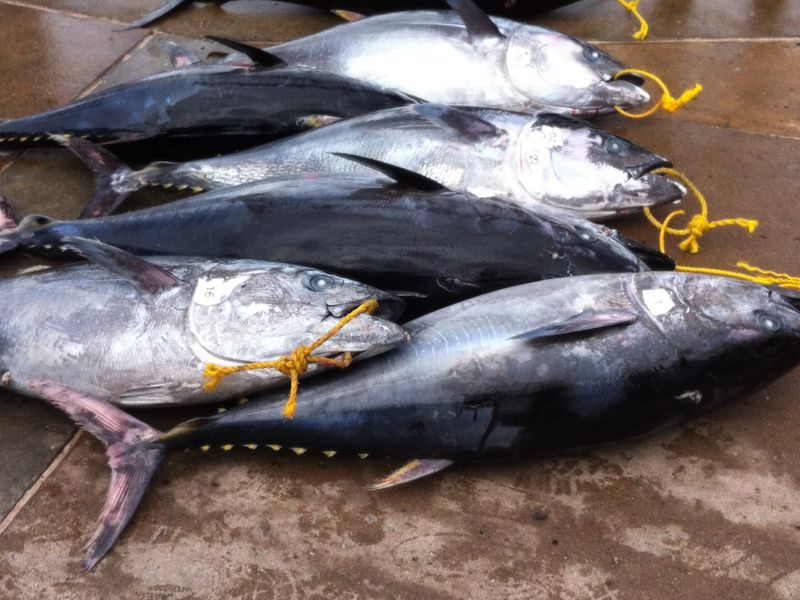 Threatened Bluefin Tuna Sells for Record $3 Million In New Year's Sale