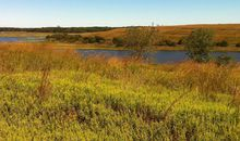 The Transformation of Freshkills Park From Landfill to Landscape